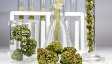 cannabis on a lab bench in flasks and test tubes